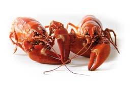SFCR Program – Seafood Importer